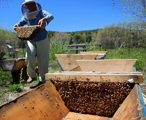 Topbar Hive