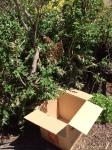 Box under swarm